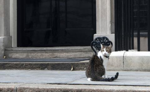 Gatto Larry - Londra - 26-08-2013 - L'attesa di Larry, professione gatto del Primo Ministro Cameron