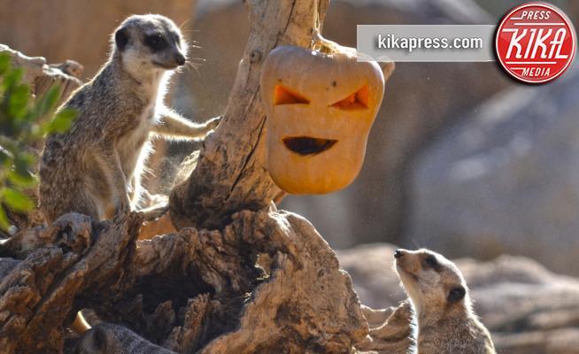 Lemuri - Valencia - 29-10-2014 - Tutti pazzi per Halloween: una festa bestiale!