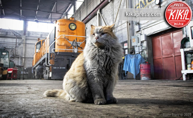 Dirt Mascotte Museo Ferroviario - ely - 30-04-2019 - Dirt, il gatto mascotte del Nevada Northern Railway Museum