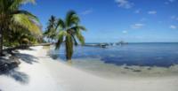 Palm Tree Beach 3 - Belize - 26-03-2012 - Belize
