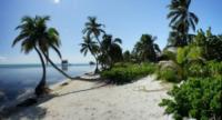 Palm Tree Beach 2 - Belize - 26-03-2012 - Belize