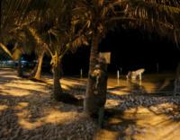 Palm Tree Beach at Night 2 - Belize - 26-03-2012 - Belize