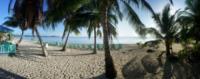 Caribbean Beach, Palm Trees - Belize - 28-03-2012 - Belize