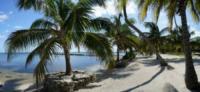 Palm Tree Beach 4 - Belize - 26-03-2012 - Belize