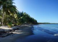 Palm Trees on Isolated Beach - Repubblica Dominicana - 28-03-2012 - Repubblica Dominicana