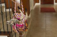 Mike - Spring - 04-04-2012 - Un canguro per Kayla: è diventato il suo migliore amico