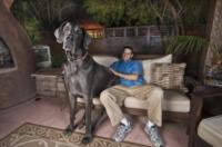 Dave Nasser, George - Tucson - 13-04-2012 - Io & George, una vita con il cane piu' grande del mondo