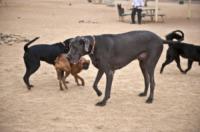 George - Tucson - 13-04-2012 - Io & George, una vita con il cane piu' grande del mondo