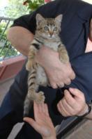 """Il gatto deforme - Fano - 04-06-2012 - Don Piergiorgio Giorgini: a Carrara """"Ridateci la vita"""""""