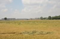 Cerchi nel grano - Caravaggio - 11-06-2012 - Cerchi nel grano a Caravaggio, bufala o alieni?