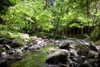 La foresta di Camaldoli - 16-07-2012 - L'eremo di Camaldoli compie mille anni