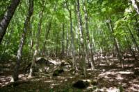 Foresta, Eremo di Camaldoli - 16-07-2012 - L'eremo di Camaldoli compie mille anni