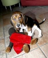 """Iggy - Bergamo - 09-08-2012 - I primi ad adottare un cane di Green Hill: """"Iggy è uno di noi"""""""