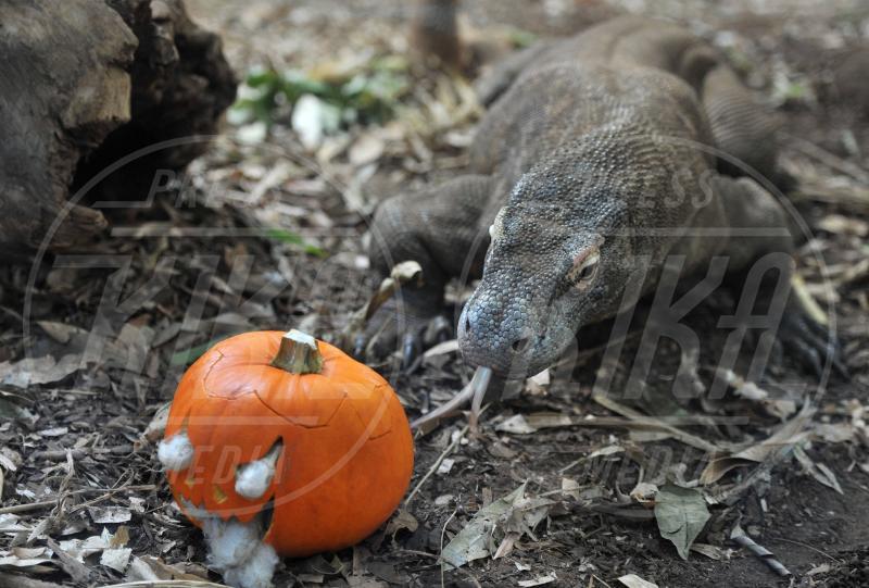 Raja drago di Komodo - Londra - 30-10-2012 - Negli zoo inglesi anche gli animali festeggiano Halloween