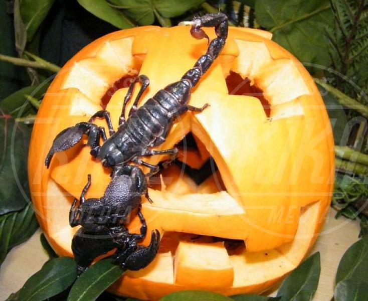 Scorpione - Oxfordshire - 30-10-2012 - Negli zoo inglesi anche gli animali festeggiano Halloween