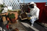 """Antonio Barletta - Torino - 04-11-2012 - """"Le api? Vivono meglio in città"""""""