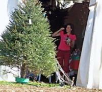 Minnie Driver - Malibu - 15-12-2004 - Star come noi: si corre a comprare l'albero di Natale