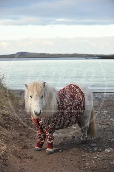 Vitamin - Scozia - 25-01-2013 - In Scozia anche i pony escono in cardigan