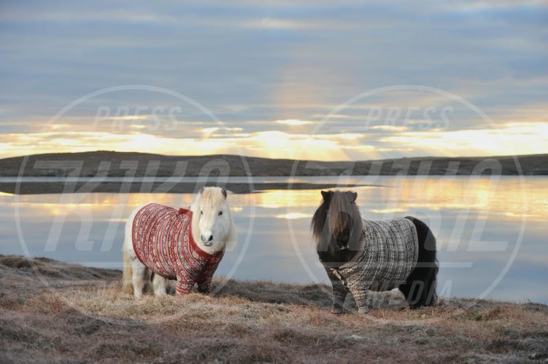 Vitamin, Fivla - Scozia - 25-01-2013 - In Scozia anche i pony escono in cardigan