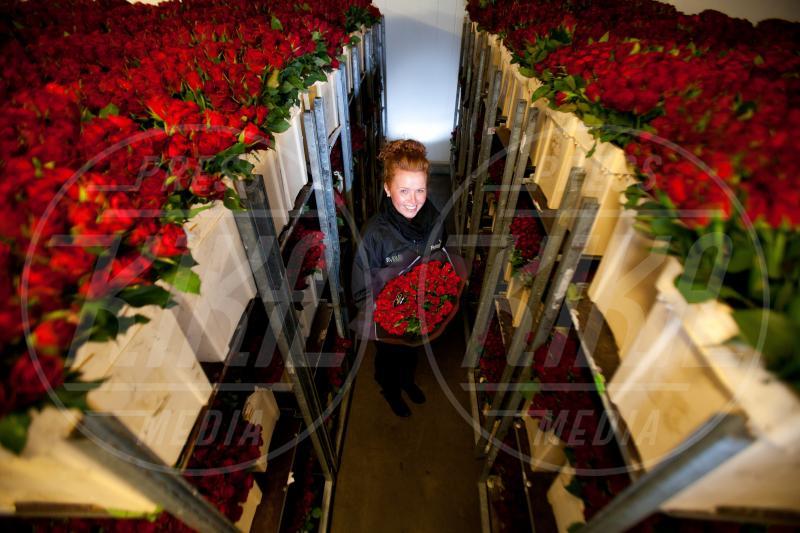 Louise Young - 11-02-2013 - Perchè proprio le rose rosse per San Valentino?