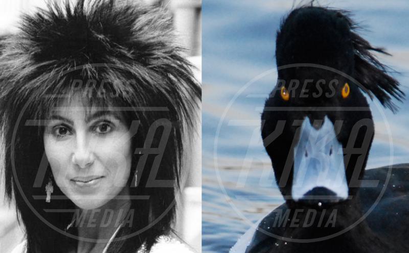 Cher - 22-04-2013 - Stravaganze da star: ispirazione antropomorfa