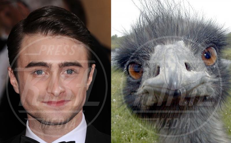 Daniel Radcliffe - 22-04-2013 - Stravaganze da star: ispirazione antropomorfa