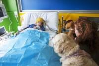 """Riccardo Fusari, Angiolina, Debra Buttram - Pavia - 21-05-2013 - Un cane in corsia: """"Così i bambini operati tornano a sorridere"""""""