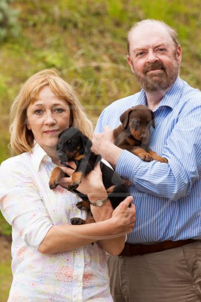 Olga Holtom, Mark Holtom - 13 cuccioli di dobermann - Suffolk - 12-06-2013 - Stivali di gomma per ospitare un fiume di cuccioli