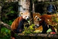 25-05-2013 - Su le mani! C'è un nuovo inquilino all'Highland Wildlife Park