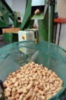 Produzione sughero - Calangianus - 13-08-2013 - Calangianus: un tappo contro la crisi