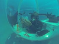 Ocean reef - Basilico sottomarino - Noli - 14-08-2013 - In Liguria il basilico diventa subacqueo