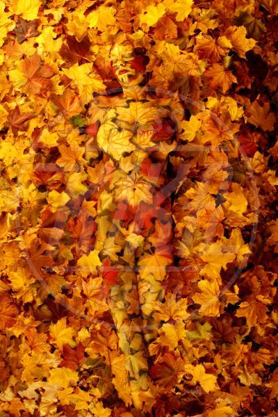 Autumn - Innsbruck - 03-11-2011 - L'arte sul corpo: il bodypainting di Johannes Stoetter