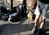 """Formichieri giganti - Londra - 21-08-2013 - Il rospo dello zoo di Londra: """"Sono grasso, e allora?"""""""
