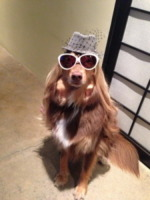 Cane Amanda Seyfried - Los Angeles - 30-08-2013 - Dillo con un tweet: Pamela Prati, 50 anni di meraviglie
