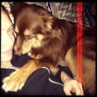 Amanda Seyfried - Cane Amanda Seyfried - Los Angeles - 30-08-2013 - Dillo con un tweet: Pamela Prati, 50 anni di meraviglie