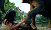 Katy Perry - 06-09-2013 - Katy Perry è la regina della giungla
