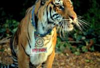 06-09-2013 - Katy Perry è la regina della giungla