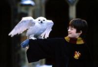 Edvige, Harry Potter - 17-09-2013 - Harry Potter 70 anni prima: JK Rowling torna a scrivere