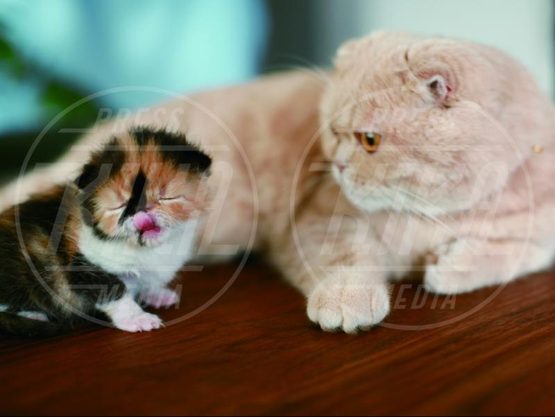 gatto Memebon - Giappone - 23-09-2013 - Ecco Memebon, una vita alla Truman Show