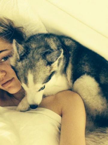 Miley Cyrus - 24-11-2013 - Dillo con un Tweet: a Miley Cyrus sono rimasti solo i cani