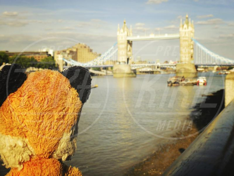 Mr. Fox - Londra - 22-06-2010 - I viaggi strabilianti di Mr. Fox, la volpe di peluche