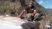 Scheletro sirena - 09-08-2014 - Arrivata dai Caraibi la Sirena trovata a Lampedusa