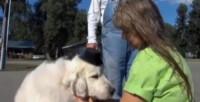 Il cane Duke - Cormorant - 14-08-2014 - Duke, il cane diventato Sindaco di una città