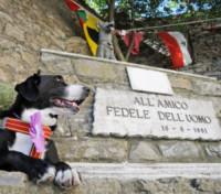 Napoleone - Camogli - 16-08-2014 - Premio internazionale fedeltà del cane: vince Chloé