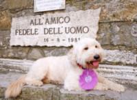 Tobia - Camogli - 16-08-2014 - Premio internazionale fedeltà del cane: vince Chloé