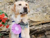 Erasmo - Camogli - 16-08-2014 - Premio internazionale fedeltà del cane: vince Chloé