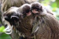 Ecco le due nuove attrazioni dello zoo di londra for Nuove case coloniali in inghilterra