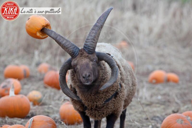 Montone Devlin - Londra - 27-10-2014 - Tutti pazzi per Halloween: una festa bestiale!
