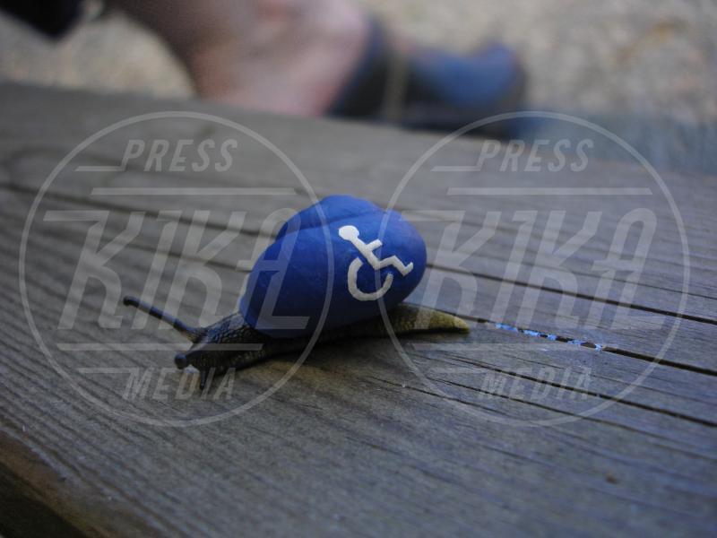 Snailpimp - Svezia - 05-11-2014 - Snailpimp: quando le lumache diventano opere d'arte