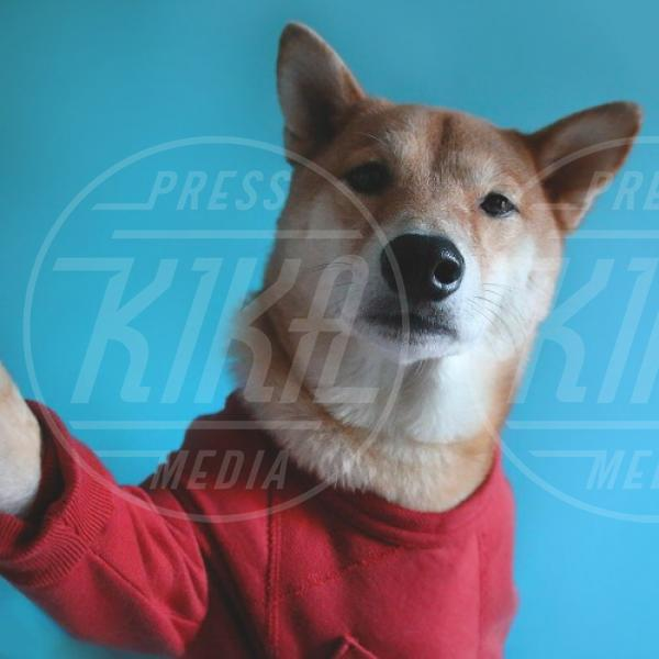 Bodhi - New York - 05-11-2014 - Bodhi, il cane modello che fa impazzire il web